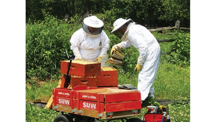 Local beekeepers encourage state trend toward backyard hives