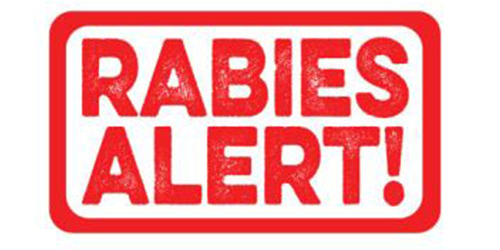 RABIES CASE CONFIRMED IN MULLICA HILL