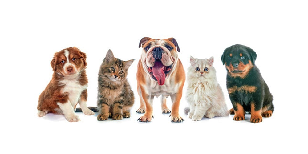 Dates announced for Countywide 2020 Free Rabies Clinics