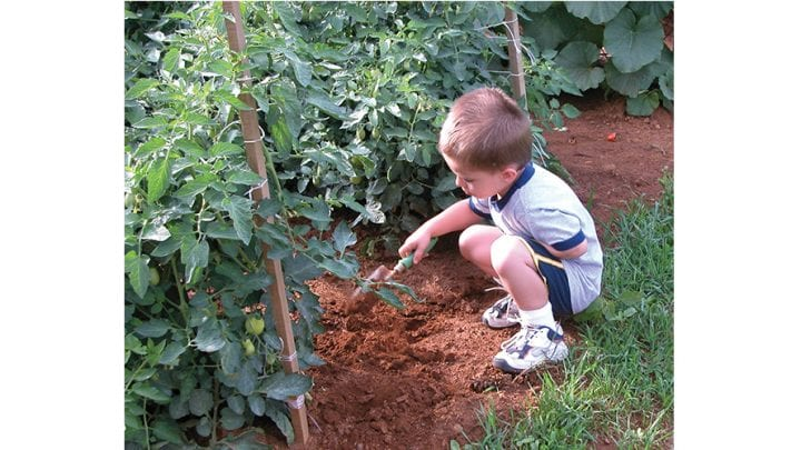Home Gardening Encouraged During the COVID-19 Pandemic